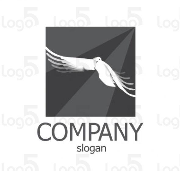 weiße Taube mit schwarz-grauem Hintergrund